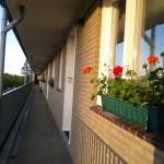 2012 Bloembakken Flat Ringweg Koppel (3)